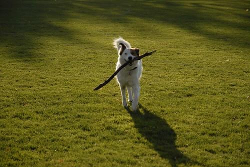 Got a Stick