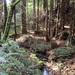 Purisima-2011-11-27
