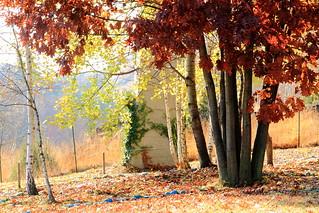 Damjl en otoño