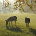 Autumn morning in Donkeyland 4