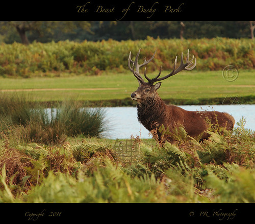 The Beast of Bushy Park.