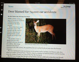 I bet that deer has trouble getting car insurance