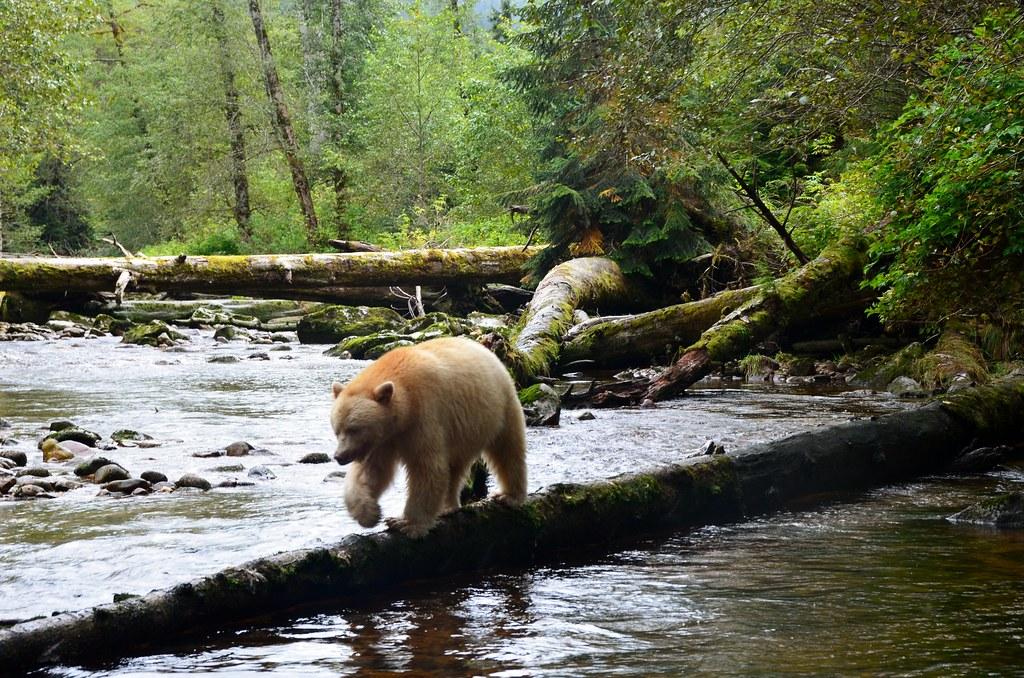 El Bosque del Gran Oso: parajes maravillosos de vacaciones.