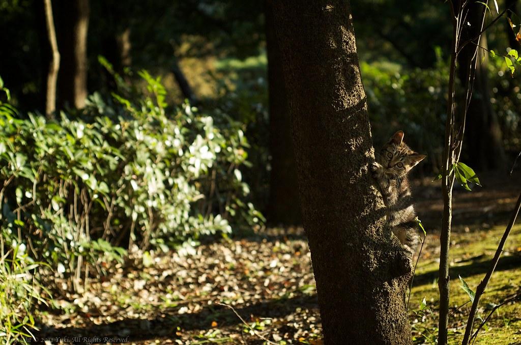 Tree climber #5