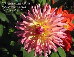 Flowers, butterflies & garden things Vol 2