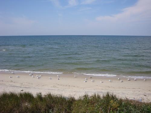 bridge seagulls virginia scenic overlook chesapeakebay