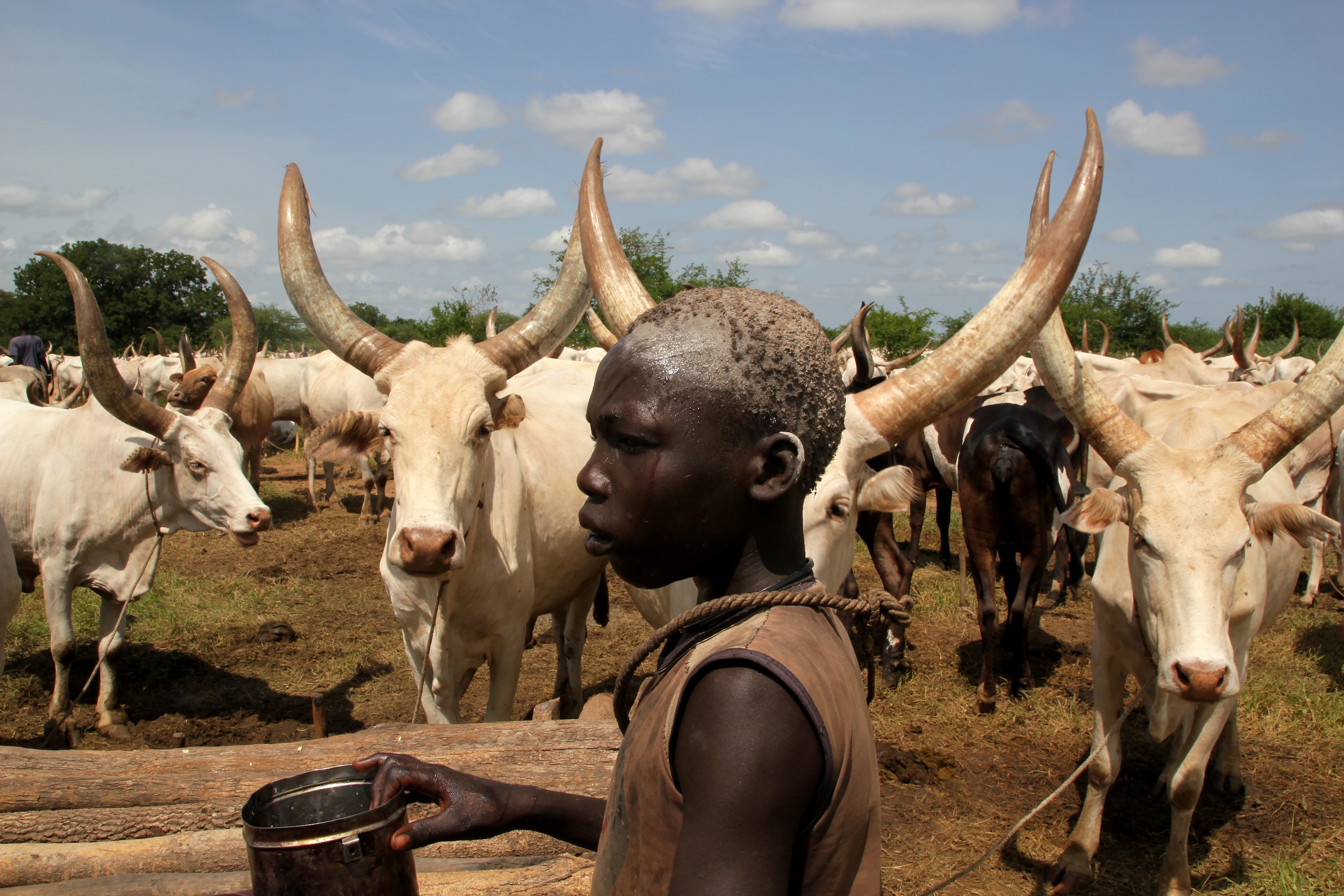 South sudan where livestock outnumbers people and the environment a member of the mundari tribe stands amongst cattle in terekeka south sudan livestock outnumber the population in south sudan and has led to increasing publicscrutiny Image collections