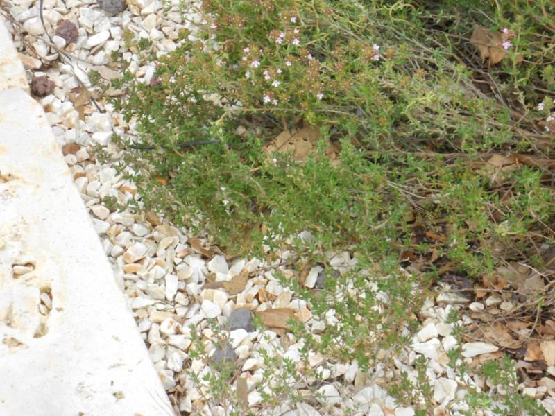 Piedras decorativas en el jardín