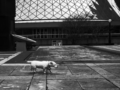 Roy Thomson Hall WITH DOG!