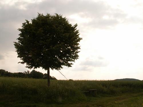 Spitze des Baums in Cunnersdorf 90