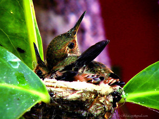 Hummingbirds Nest 1.2mpxl
