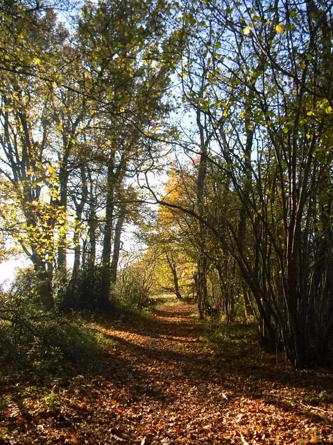 Autumnal bridleway