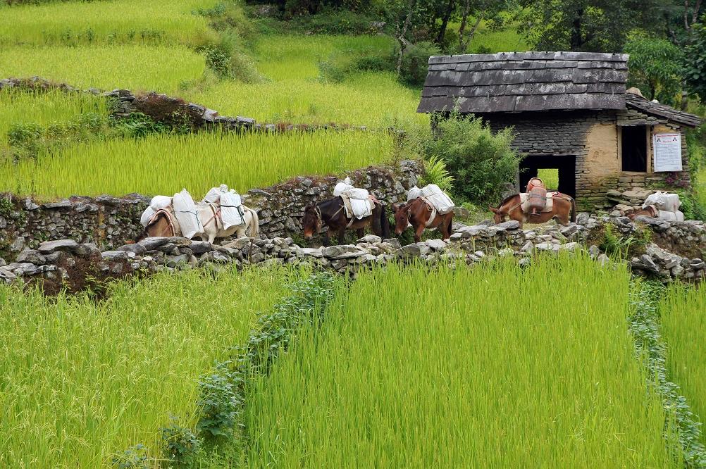 1003_Nepal_097