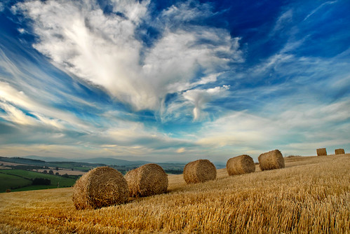 8/365 - Wicklow, Ireland: Hay Bales