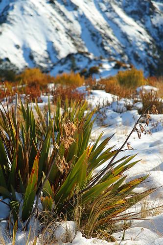 winter newzealand snow canon bush canterbury shrub dslr polariser 400d canonef2485mmf3545usm