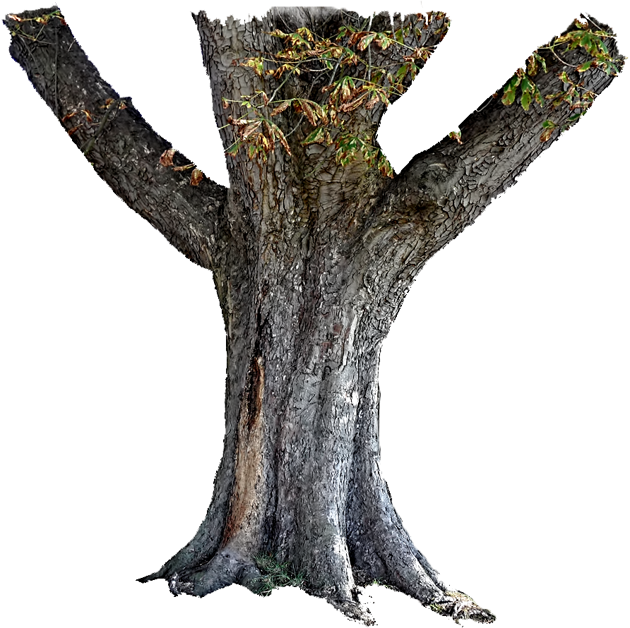 Tree Trunk Stock PNG | Flickr - Photo Sharing!