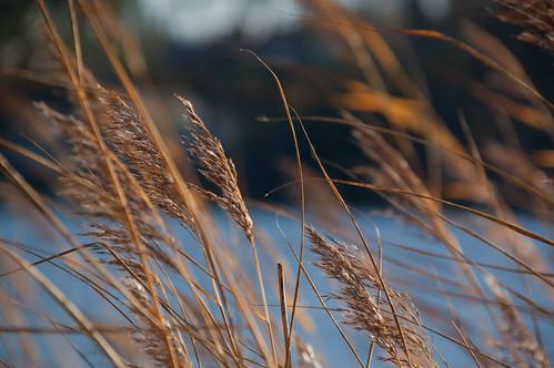 blue autumn fall reed nikon wind d40
