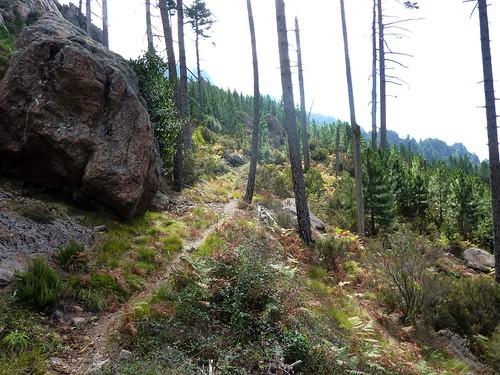 Sentier Fumicosa/Samulaghja : le sentier en approchant du ruisseau de Fumicosa