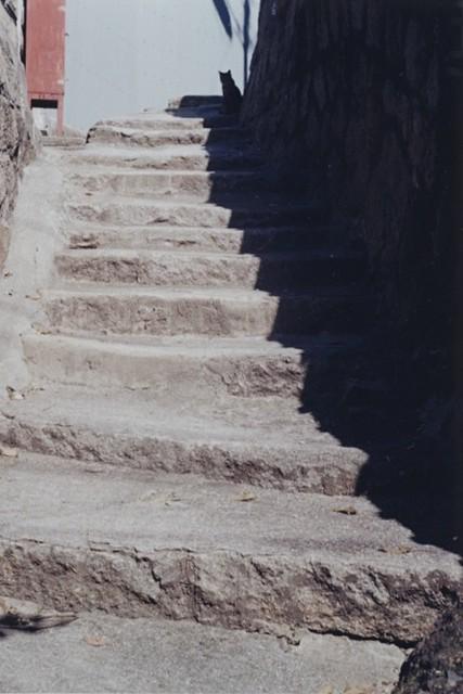 猫の尾の道~#1 (w/l, 35mm)