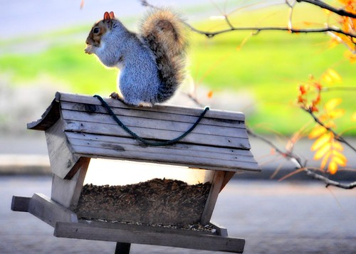 11-18-11 Squirrel Feeder? by roswellsgirl