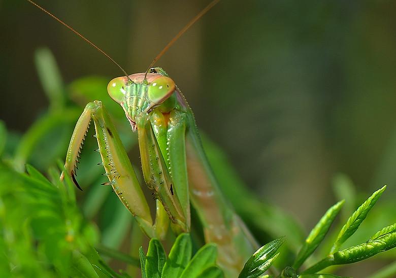 螳螂9004