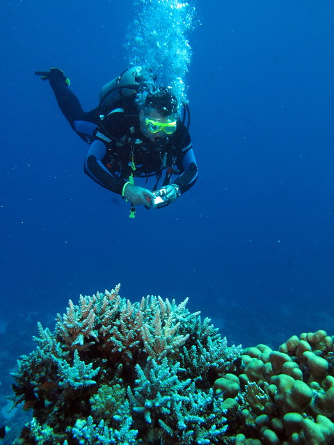 Diver photographing corals at Gota Abu Ghusur Reef, Red Sea, Egypt #SCUBA #UNDERWATER #PICTURES