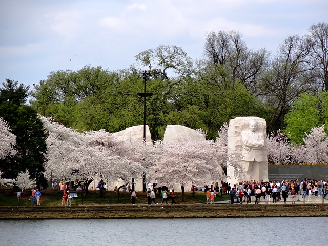 Cherry Blossoms in Washington, March 19, 2012
