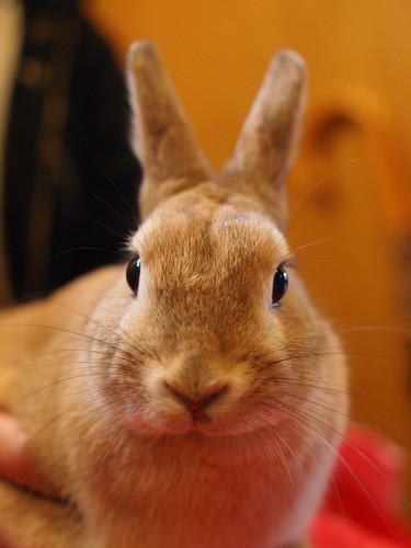 富士サファリパーク ウサギ