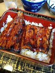 spare ribs(0.0), ribs(0.0), meal(1.0), unadon(1.0), unagi(1.0), food(1.0), dish(1.0), cuisine(1.0),