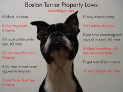 """Oct 20 2011 [Day 354] """"Boston Terrier Property Laws..."""""""