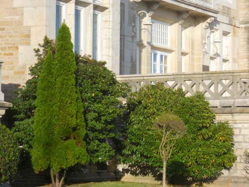Árboles en Jardines Palacio de la Magdalena