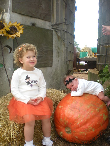 Photo Contest Entry by Lynnea Padgett