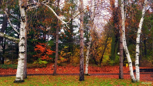 Autumn trees by blmiers2
