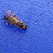 Bark fly on wheelie bin lid #2