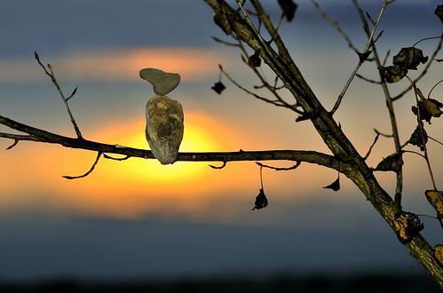 Vogel aus Stein fliegt nicht mehr