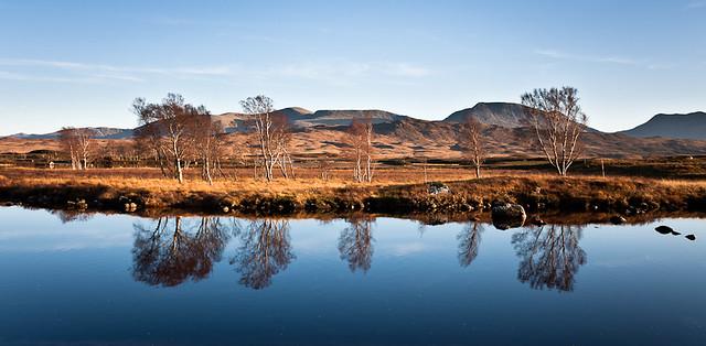 Scotland, Rannoch Moor, Loch Ba, Trees