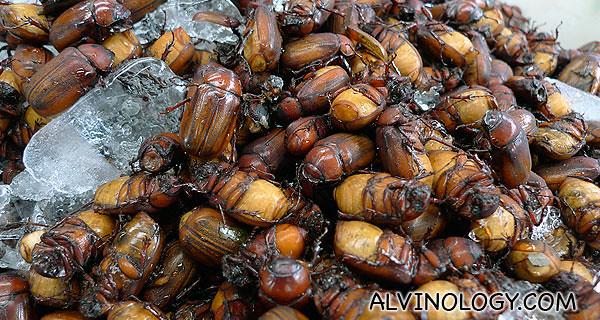 Delicious beetles