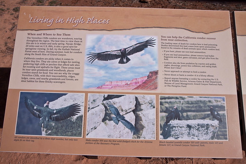 California Condor information sign