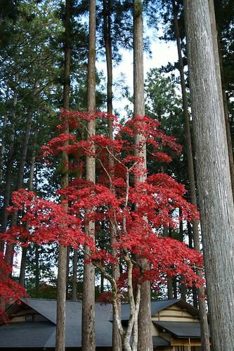 古峰神社の紅葉