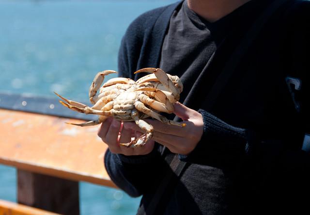 Bandon by the Sea crab derby