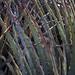 Agave; al norte de Santiago Chazumba, Oaxaca, Mexico por Lon&Queta