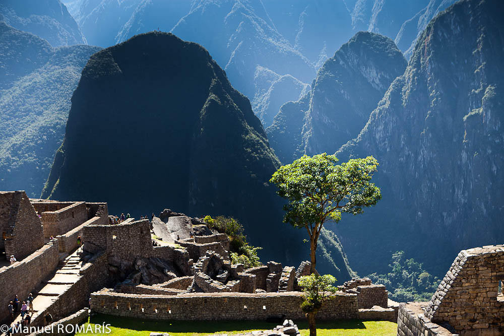 Machu Picchu, Peru, tree in the middle