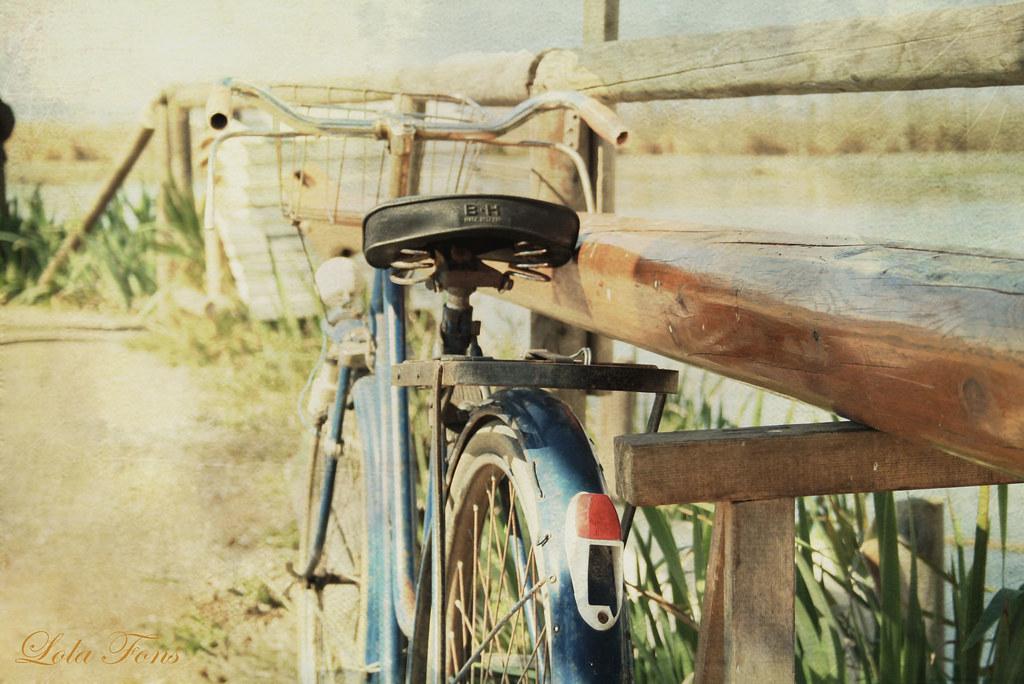 Bicicleta en albufera