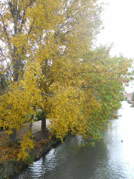 Árboles caducifolios del Canal de Castilla