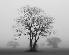Nebel des Grau(ens)