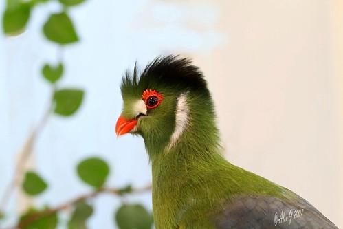 ny newyork birds canon niceshot 7d upstatenewyork naturesfinest mygearandme ringexcellence 100mmmacrof28lisusm