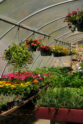 Creative Ways to Use Containers and Pots with Home Gardens
