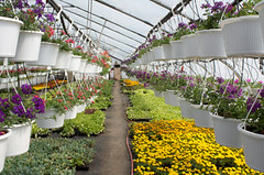 School Green House Courses