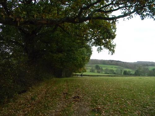 View near Burwash