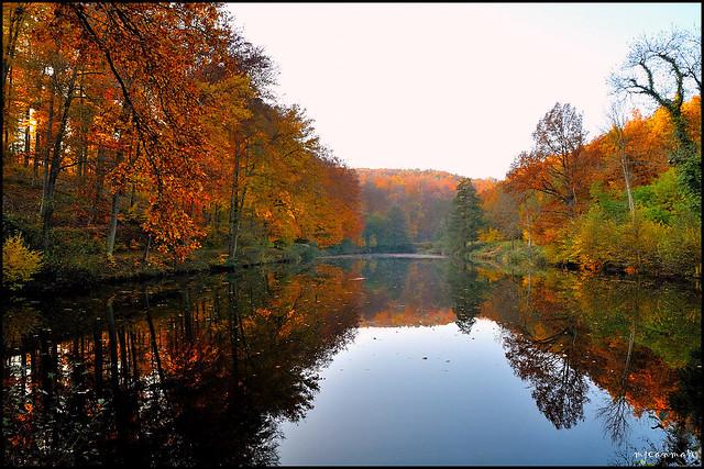 L'étang de Langensoultzbach - 1 novembre 2011